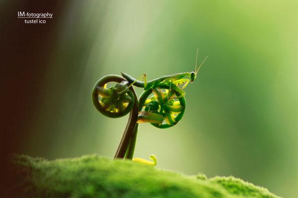 18-praying-mantis-bike