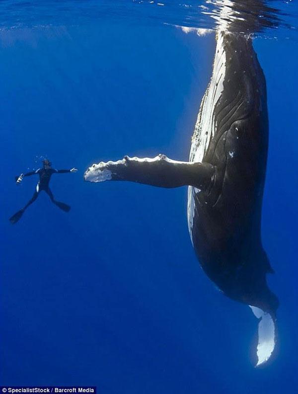 3-diver-whale-high-five-per