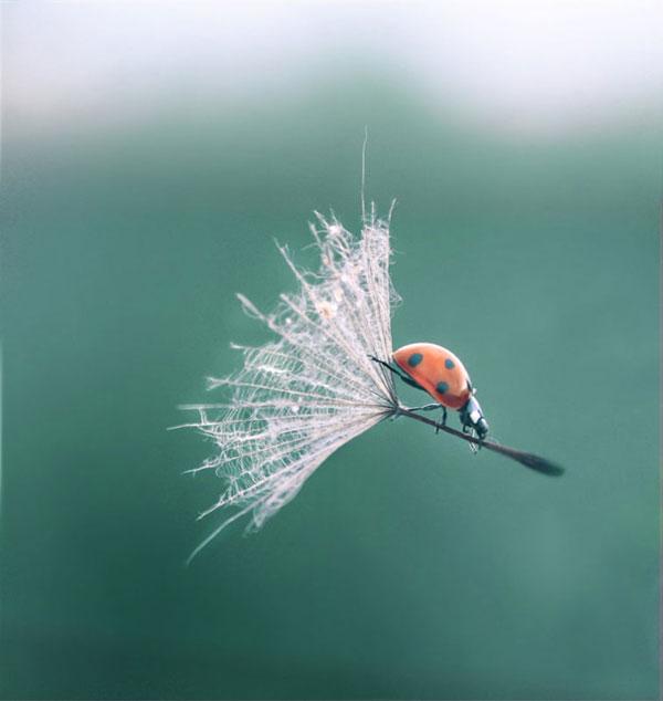 46-ladybug-dandelion-perfec