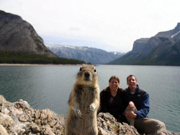 47-squirrel-photobomb-banff