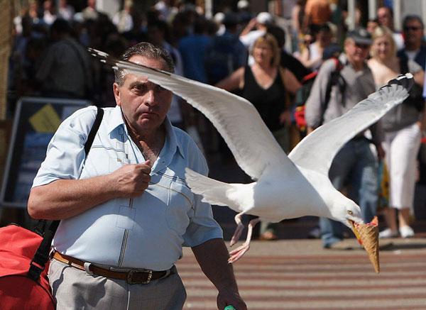 5-seagull-takes-ice-cream-p