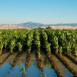 Pakistani-Scientists-cultivating-crops-with-sea-water