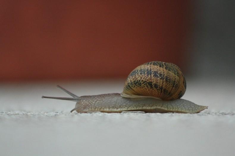 snail-368763_1280
