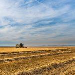 Field - Crop