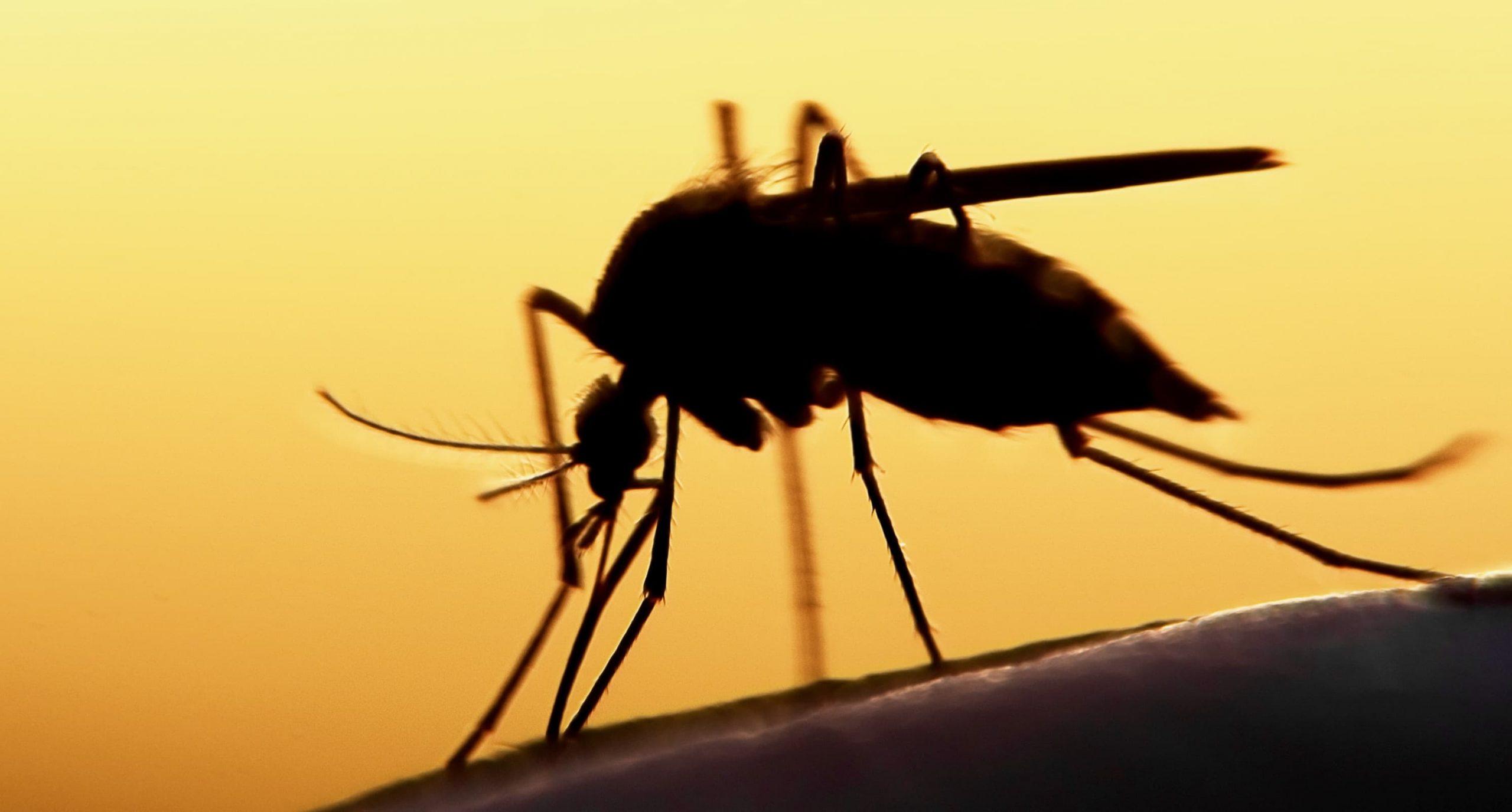 Dengue-Technology-TechJuice